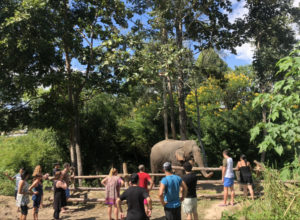 elephant excursion